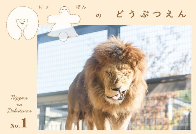 yurikcamera_001-640x440